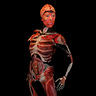 Photo #3 - Body Worlds