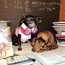 Photo #3 - Bookworm Dogs