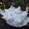 Photo #7 - Bowseer shell paper mache
