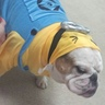 Photo #2 - Bulldog Minion