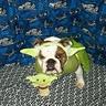 Photo #1 - Buttercup Yoda
