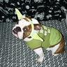 Photo #2 - Yoda Buttercup