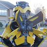 Photo #8 - Bumblebee Back View Large