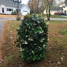 Photo #1 - Is that my son or a bush?