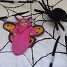 Photo #2 - Butterfly in a Web