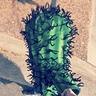 Photo #2 - Walking my cactus