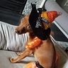 Photo #5 - Candy Corn Witch Dog