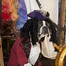 Photo #1 - Captain Hook Boston Style