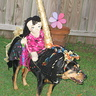 Photo #1 - carousel horse