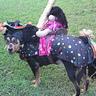 Photo #2 - carousel horse