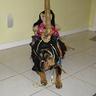 Photo #3 - carousel horse