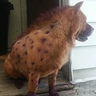 Photo #1 - Cartoon Hyena