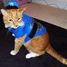 Photo #1 - Cat Cop
