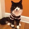 Photo #3 - Cat Burglar