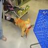 Photo #5 - CatDog