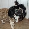 Photo #1 - Cave Dog
