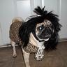 Photo #2 - Cave Dog