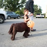 Photo #1 - Centaur
