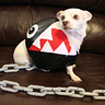 Photo #4 - Chain Chomp
