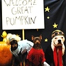 Photo #1 - Welcome Great Pumpkin!!!!