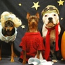 Photo #2 - It's Lucy, Linus and Snoopy! All Waiting for the Great Pumpkin!