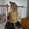 Photo #4 - Cheetah