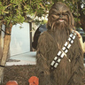 Photo #1 - Chewbacca