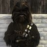 Photo #3 - Chewbacca