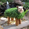 Photo #1 - Ch-ch-ch-Chia Pet!