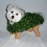 Photo #1 - Chia Pet