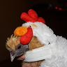 Photo #1 - Mango the Chicken