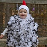 Photo #3 - Chicken Little