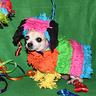 Photo #1 - Chihuahua Pinata