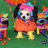 Photo #2 - Chihuahua Pinata