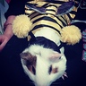 Photo #3 - Snikers the bumble bee
