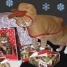 Photo #2 - Christmas cat deer