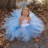 Photo #1 - Cinderella