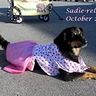Photo #3 - Sadie-rella 2014