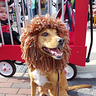 Photo #5 - Circus Ring Master & Lion