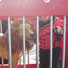 Photo #6 - Circus Ring Master & Lion