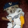 Photo #3 - Baseball Player Dog Costume