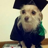 Photo #4 - Graduate Dog Costume