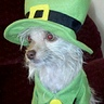 Photo #5 - Leprechaun Dog Costume