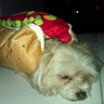 Photo #4 - and a 'hot' DOG hehe