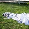 Photo #4 - Resting Bride