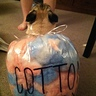 Photo #2 - Cotton Candy Pug
