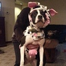 Photo #2 - Cow