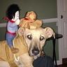 Photo #1 - Cowboy Stewie