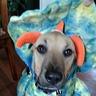 Photo #3 - Dino Stewie