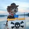Photo #2 - Cowboy Dog